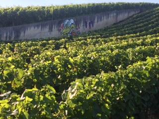 Bebar dans les vignes de Champagne!